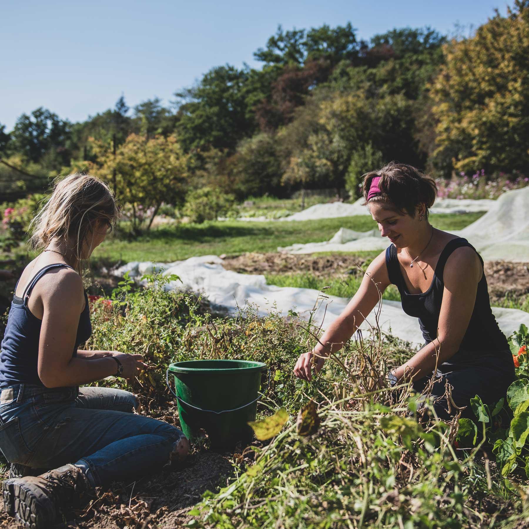 Studium Gartenbau